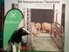 Tiertransporter von innen