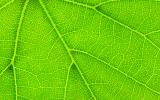 page-pflanzenschutz